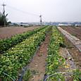 H28.06.07進む収穫