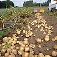 H28.06.19ジャガイモ収穫