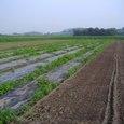 H19.07.26枝豆収穫終了