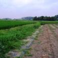 H20.07.22最終ロット収穫開始